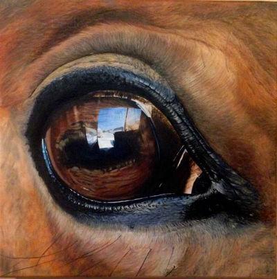 Voir la galerie Autres Peintures Animalières